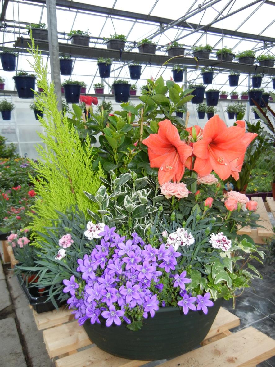 Jardin malin 37 montlouis sur loire horticulteur for Jardin malin